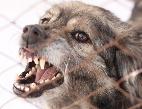 Why Dogs Bite and What to Do If You're Bitten